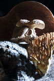 蘑菇采摘和搜寻 库存图片