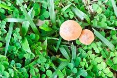蘑菇顶视图 免版税库存照片