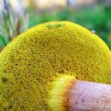 蘑菇鳃 免版税库存照片