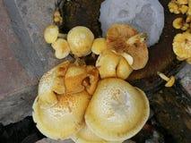 蘑菇黄色 库存照片