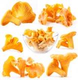 蘑菇黄蘑菇的收集 免版税库存图片
