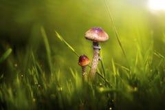 蘑菇,宏指令, 图库摄影