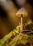 蘑菇,木头,膳食,饮食,褐色, 库存图片