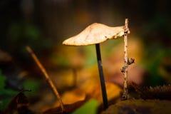 蘑菇,木头,膳食,饮食,褐色, 免版税图库摄影
