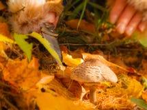 蘑菇,木头,膳食,饮食,褐色, 免版税库存图片