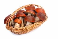 蘑菇,白杨木在一白色backgro的一个柳条筐采蘑菇 免版税库存照片