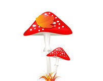 蘑菇 伞形毒蕈 秋天图象叶子范围xxxl 库存照片