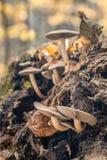 蘑菇系列 库存图片