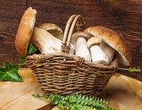蘑菇-可食的牛肝菌蕈类 库存照片