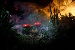 蘑菇 在奥秘黑暗的森林特写镜头的幻想发光的蘑菇 伞形毒蕈muscaria,在青苔的蛤蟆菌在森林魔术mushroo 免版税库存图片