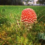 蘑菇幻想 库存照片