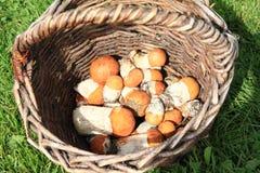 蘑菇-橙色桦树牛肝菌 免版税库存照片
