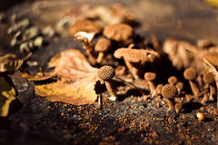蘑菇 秋季森林 免版税库存图片
