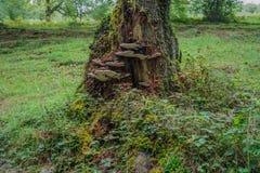 蘑菇&草本在树干 库存图片