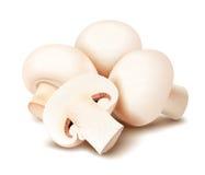 蘑菇 蘑菇 免版税库存图片