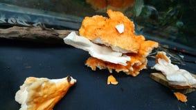蘑菇 库存图片