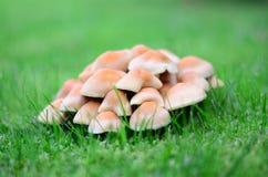 洋蘑菇 免版税图库摄影