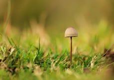 蘑菇 免版税图库摄影