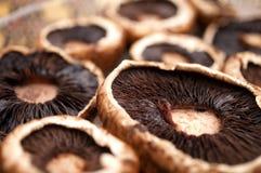 蘑菇 图库摄影