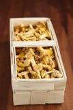 黄蘑菇 图库摄影
