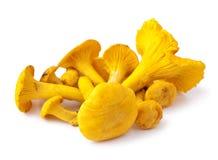 黄蘑菇 免版税库存照片