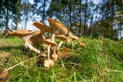 组蘑菇 库存图片