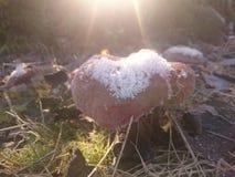 蘑菇 免版税库存图片