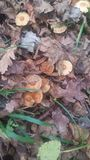 蘑菇 库存照片