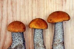 蘑菇leccinum versipelle 免版税库存照片