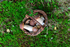 蘑菇porcini 免版税图库摄影