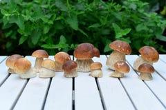 蘑菇porcini 库存照片