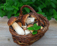蘑菇porcini 图库摄影
