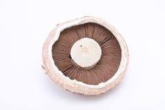 蘑菇portabello 库存图片