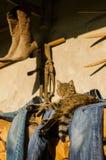 虎斑猫休息 猫说谎房子外 库存照片