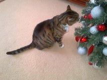 虎斑猫和圣诞树 免版税图库摄影
