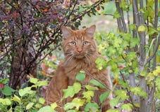 虎斑猫在庭院里 免版税库存照片