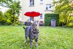 虎斑猫在庭院里 库存照片