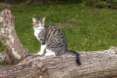 虎斑猫坐树树干 免版税图库摄影