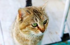 虎斑猫猫顶头看起来的大猫` s注视幼小猫 库存照片