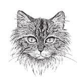 虎斑猫纵向 免版税库存照片