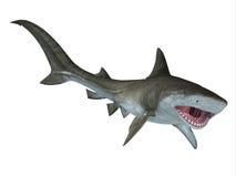 虎鲨下颌 库存照片