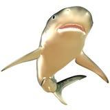 虎鲨身体 免版税库存图片