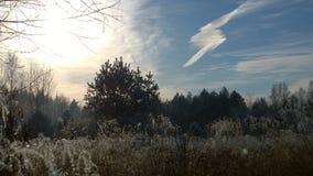 虚拟冬天 库存照片