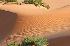 虚拟和柔软光滑的沙丘纹理 免版税库存图片