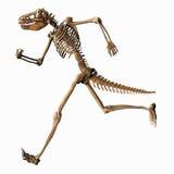 虚构骨骼 库存例证