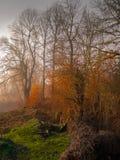 虚幻秋天的风景 生动的颜色 免版税库存照片