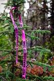 虫管理丝带被栓对一棵树在被监测的区域 免版税图库摄影