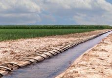 虹吸管管被灌溉的玉米田 库存照片