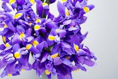 虹膜开花背景,春天花卉patern 免版税库存照片