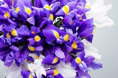 虹膜开花背景,春天花卉patern 库存照片